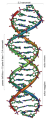 239px-DNA Overview it .png